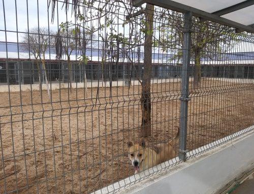 El Centro Municipal de Protección Animal continúa con la atención a los usuarios y el cuidado de perros y gatos