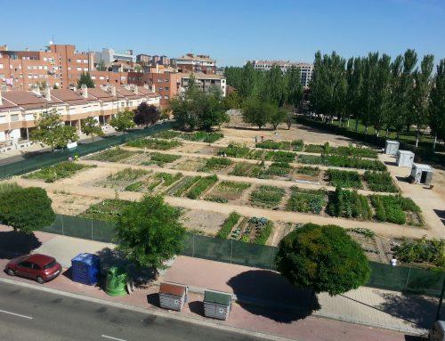 El Ayuntamiento retomará los programas de envejecimiento activo con los huertos ecológicos cuando lo autorice el Gobierno