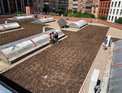 Visto bueno de Europa al jardín sostenible instalado en el tejado del mercado El Campillo