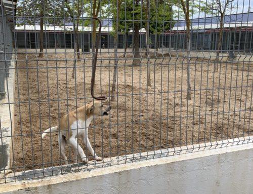 El Ayuntamiento renueva con los veterinarios el compromiso para controlar y garantizar el bienestar de las mascotas